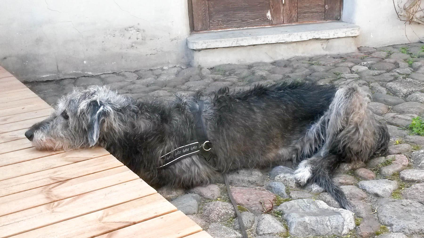 Tallinnassa koiran voi ottaa moniin paikkoihin. Tässä terassilla. © tripsteri.fi / Veera Marjamaa