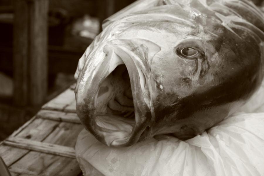 Kala Catanian kalatorilla © Simona Salerno Flickr.com/photos/simona_ss/