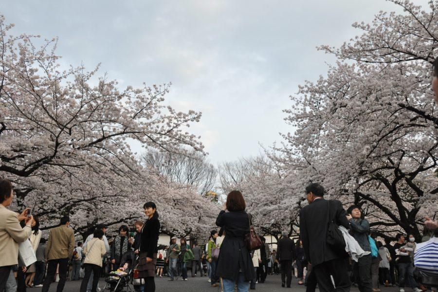 Sakurakävelyllä. Kuva: Marufish, flickr.com, CC BY-SA 2.0.