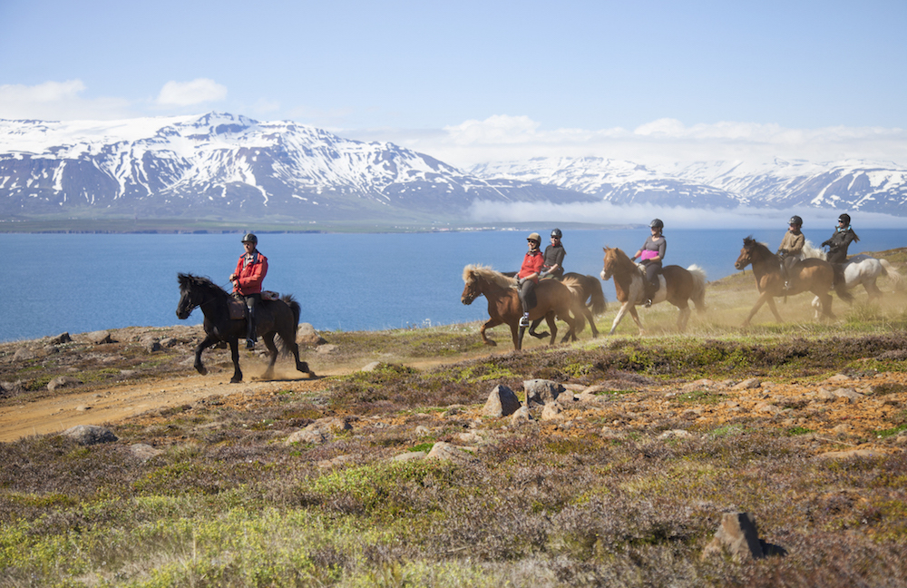 Islanninhevosia aloittelijoille ja kokeneille. Kuva: Björgvin Hilmarsson