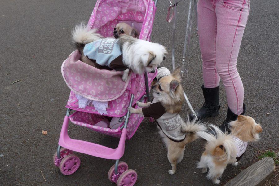 Koiraperhe vaunuretkellä. Kuva: Jeremy Hall, flickr.com, CC BY-SA 2.0.