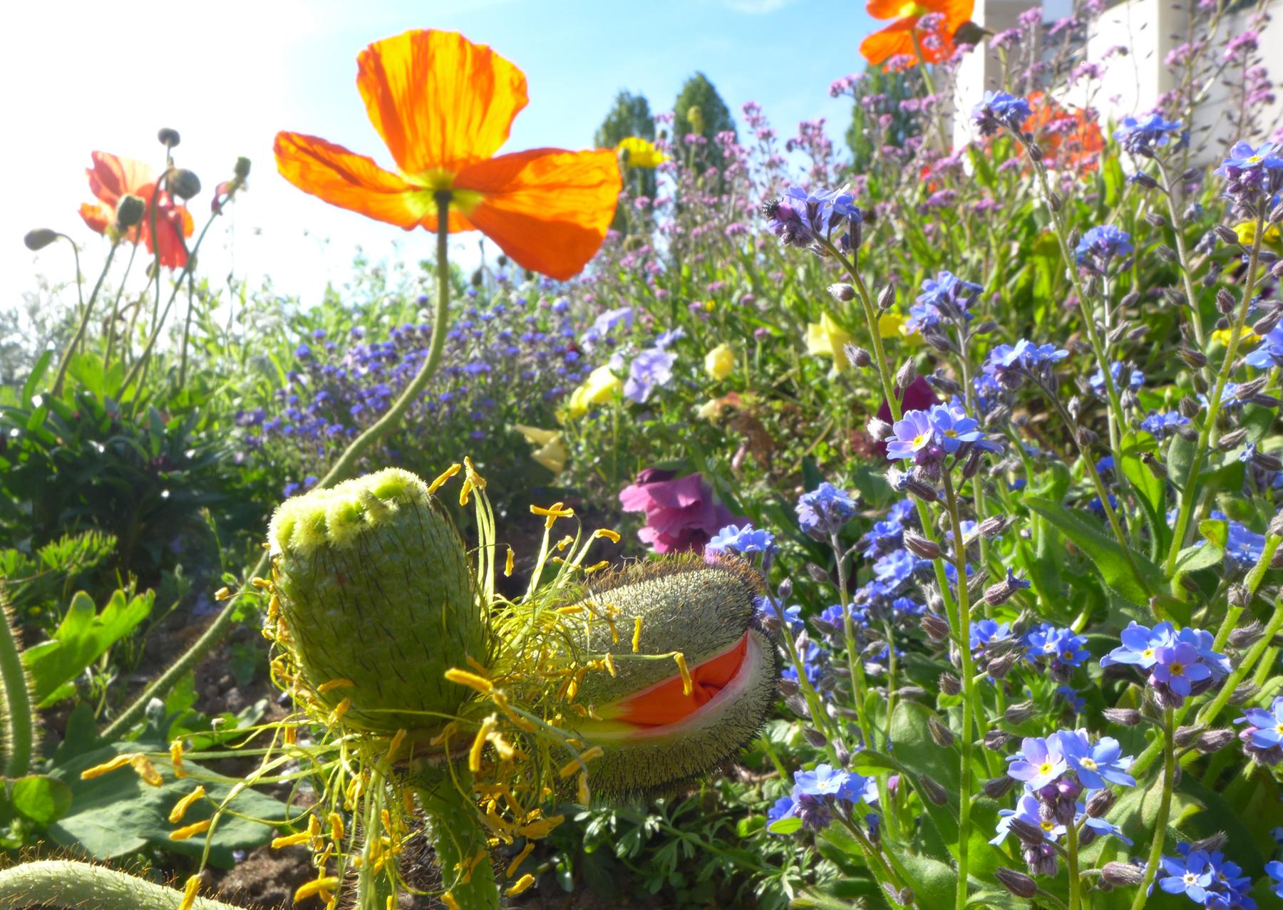 """Keväisiä kukintoja ja """"rikkaruohoja"""" Bellevillen puistossa. © Tripsteri / Anneli Airaksinen"""