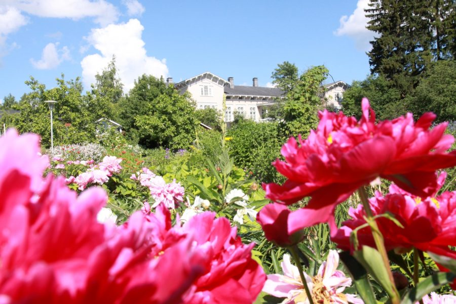 Kenkäveron puutarha on kukassa läpi kesän.